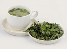 manfat minum teh daun kelor