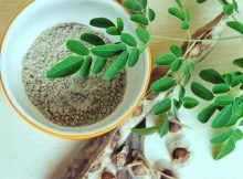 manfaat pohon kelor